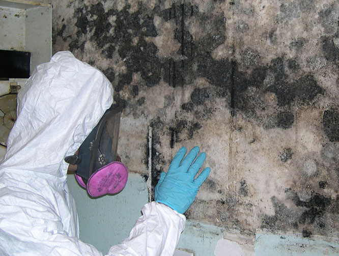 Identifying and Mitigating Mold Dangers