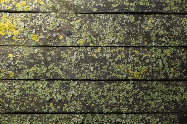 deck algae and fungus remove