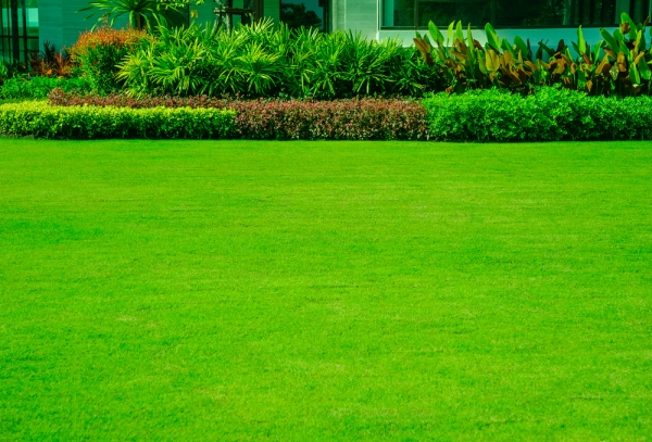 Keeping Your Grass Green: An All-year-Round Guide