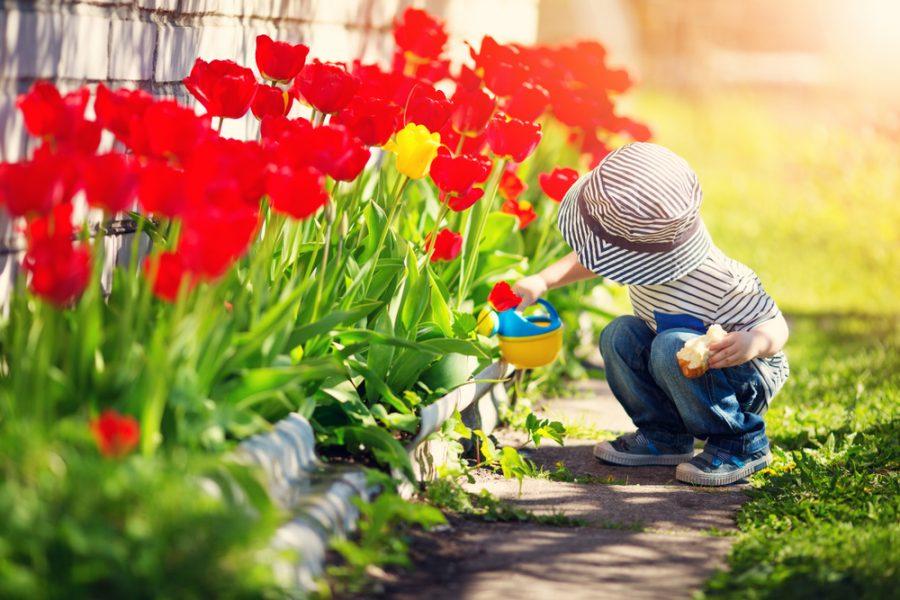 Top Priorities When Creating A Family-Friendly Garden